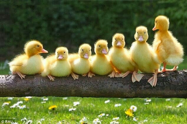 the latest 6441a 5745c Back to Basics 'Have your Ducks in a Row' - Just Us Lawyers